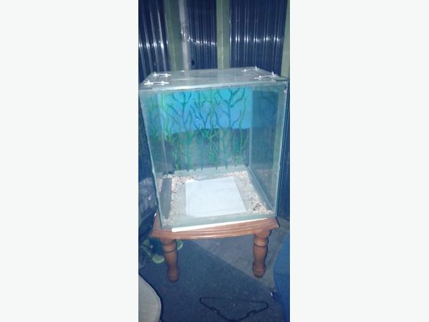 260 litre glass fish tank
