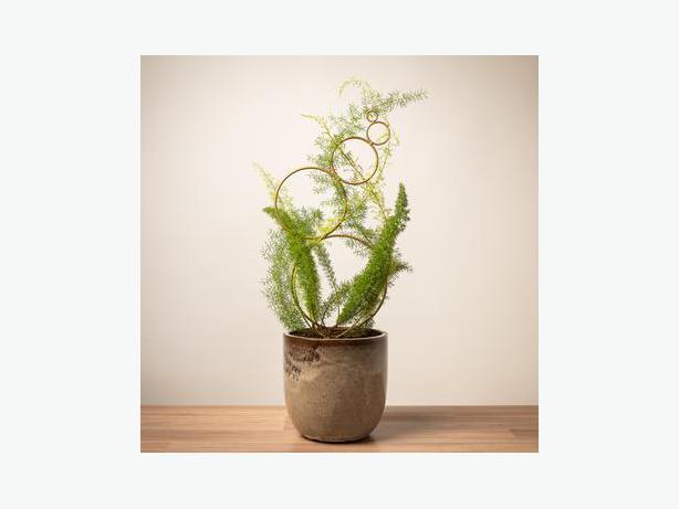 Rare Indoor Plants