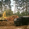 Tree Removal Rodney