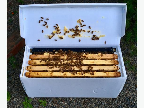 5 frame Nuc Hive!