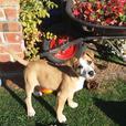 Pound Paws Rescue - Zoe
