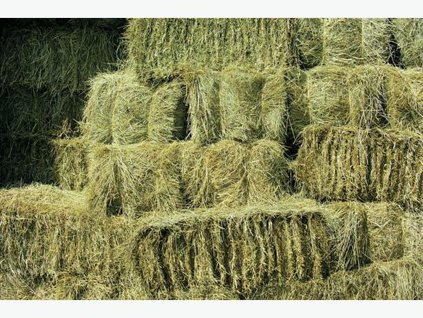 Quality Meadow Hay Bales x 50
