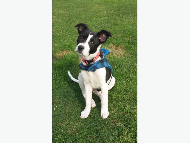 Pound Paws Rescue - Missy
