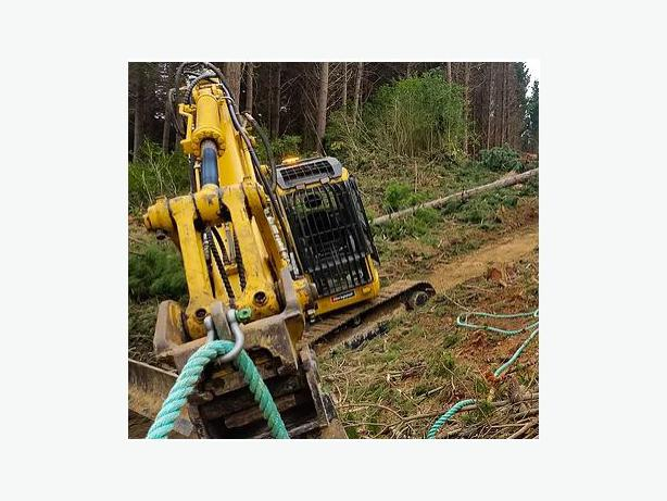 Best Tree Trimming Services in Nelson